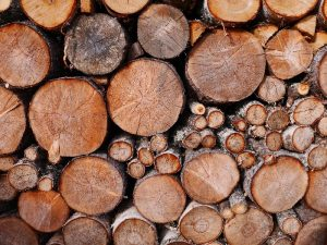 Free Firewood November 2020 New Garden Friends Meeting